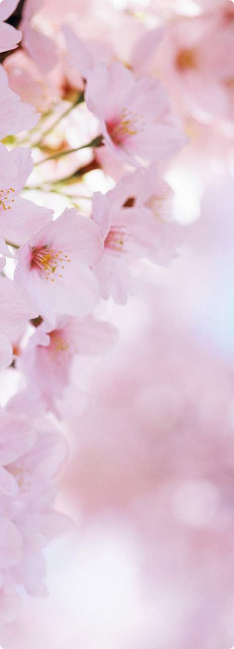 flowers01f