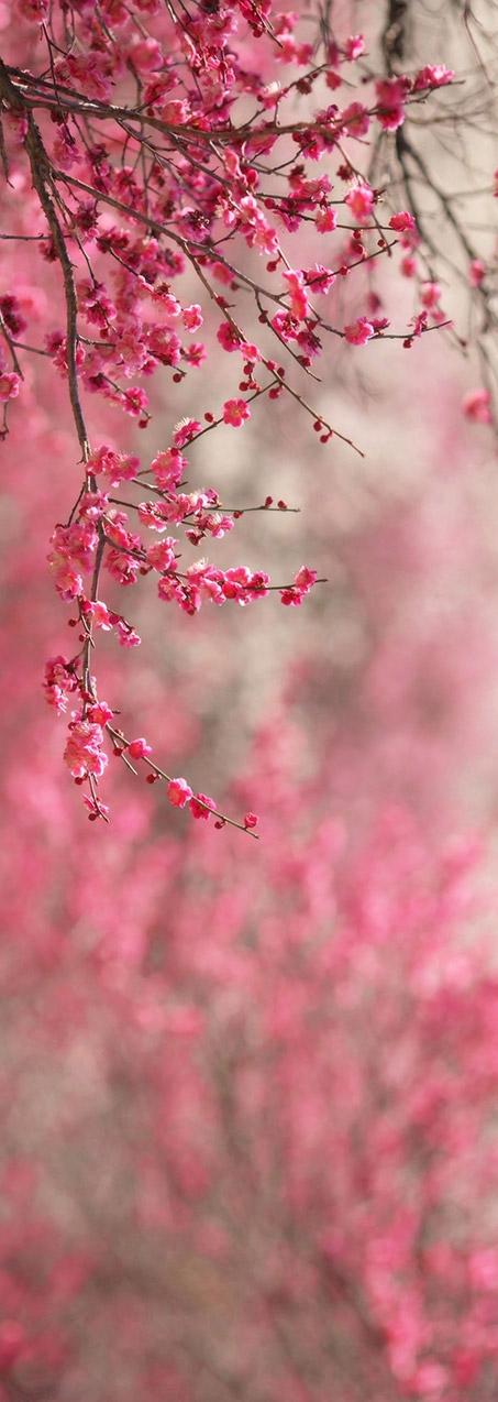 flowers02c